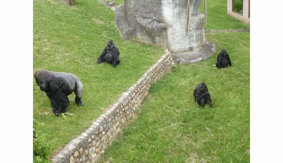 Safaris : des zoos magnifiques en France ?